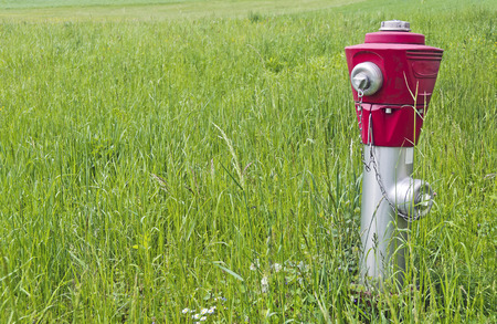 fodder: hydrant with red head part situated in a green fodder meadow Stock Photo