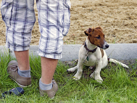 mournful: male  feet standing on the lead of a young small dog Stock Photo