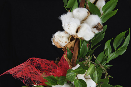 plant seed: floral arrangement with  a Gossypium plant with open seed capsules and a decor ribbon of red fibres