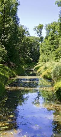 alluvial: water course in the alluvial forest at the river Danube near Tulln, Austria