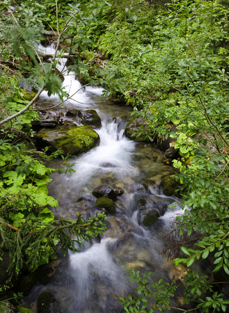 brooklet: forest brook in the Gailvalley of Tirol, Austria