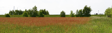 red blooming meadow behind a dike at the laggoon Zingster Bodden, Germany