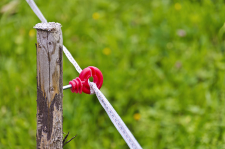 ribbon of an electric pasture fence fastened with a red isolator to a wooden stake Stock Photo