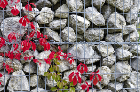 red vine leaves on a black background with gray rough boulders