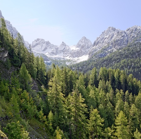 valley of the Laserz creek with larch forest and the peak sof the Lienz dolomites, Tirol, Austria