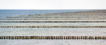 rows of wooden breakwater stakes until the horizon in the Baltic sea at Zingst, Germany Stock fotó