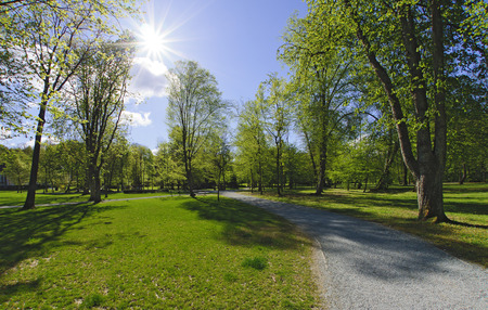 park with old trees in spring and bright sun, Bath Tatzmannsdorf, Burgenland, Austria