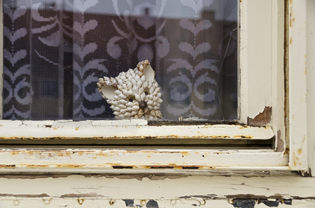 rotten wooden window with peeling off painting and a head shaped like a cat made by seashells behind Banco de Imagens