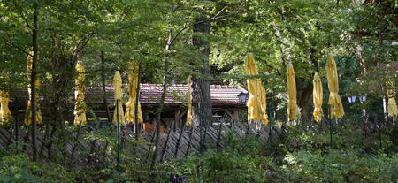 fenced pub garden with yellow sun umbrellas at a broadleaf forest