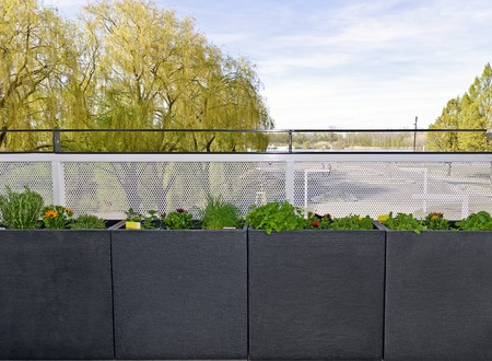 boxes with fresh herbs and flowers on a balcony