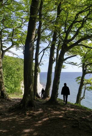 tourists in the forest of the Jasmund Nationalpark with view to the chalk cliffs of Ruegen and the Baltic sea, Germany Stockfoto