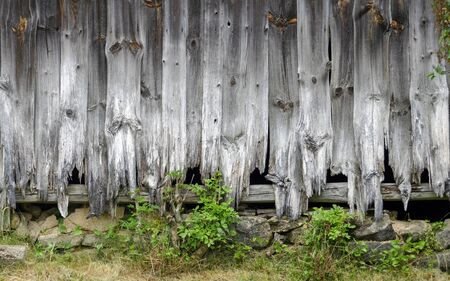 weathered and partly rotten wall of a derelict barn made from wooden planks