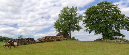 panoramic view of a pasture with a big tree and two horses in the region Waldviertel near the village of Lauterbach, Austria