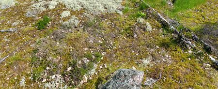 Forest soil of granite rock overgrown by lichens and moss, Sweden 版權商用圖片
