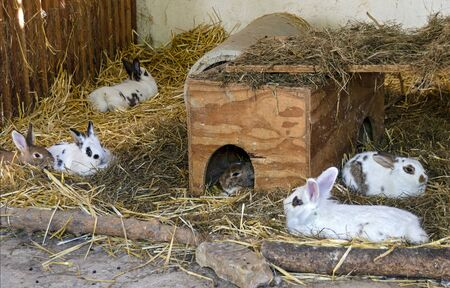 some rabbits in a stable with hay and straw