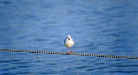 seagull tripping on a steel rope before blue water
