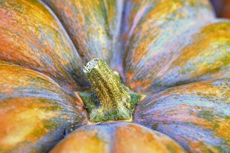 near view of the stem base of a great food pumpkin Stock Photo