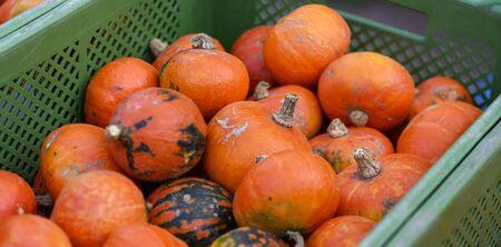 small orange food pumpkins in a green  plastic crate