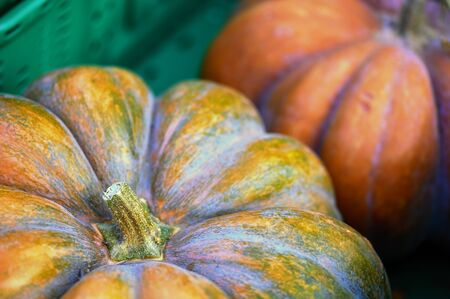 Big orange pumpkins in a green crate