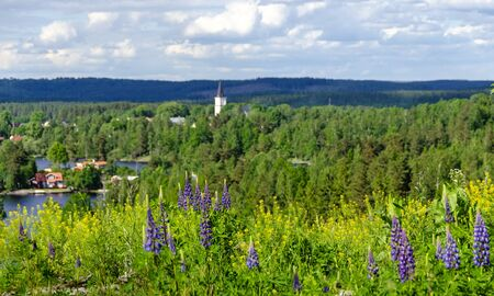 flourishing wild plants before a summery landscape with lake and church tower in the south of Sweden