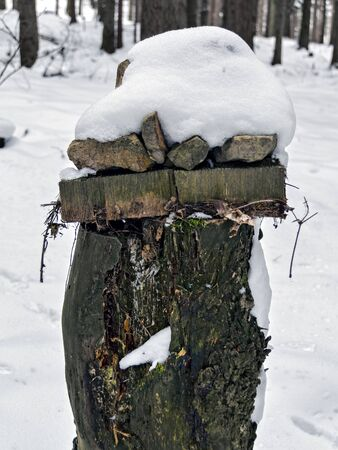 tree stump with snow cap in a winterly forest
