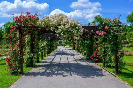 wooden pergola with flourishing roses in a park in the village of Baden near Vienna, Austria Reklamní fotografie