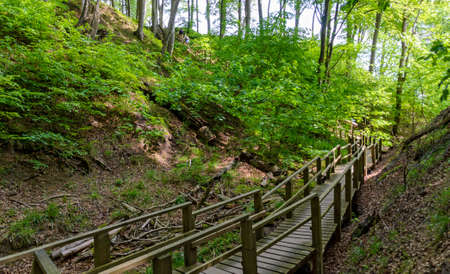 wooden staircase in the beech forest of the national park Jasmund on the island of Ruegen, Germany Standard-Bild