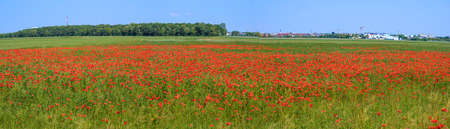 Panoramic view across a field with red flourishing common poppies with buildings of the city of Tulln in the background, Austria Standard-Bild