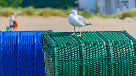 Seagull staying on a green braided beach chair Standard-Bild