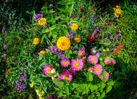 flower bed with colorful blossoms at sunshine in summer Standard-Bild