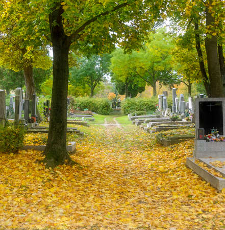 Athmosperic graveyard with colorfull leaves in autumn in Vienna, Austria Standard-Bild