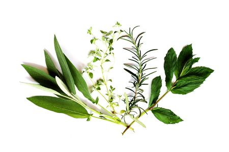 Sage thyme rosemary and mint Stock Photo