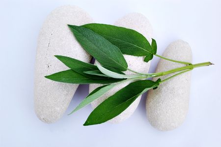 Three white stones and sage photo