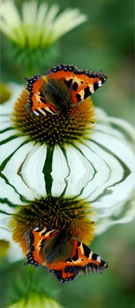 Butterfly sitting on a flower photo