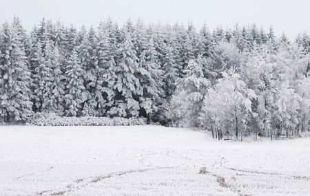 Forest, field, snow and frost photo