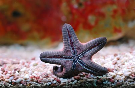 A Starfish on the wall of the aquarium Stock Photo