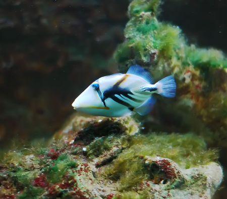 Tropical coral fish in the aquarium photo