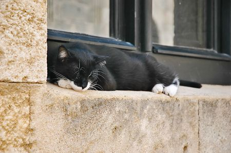 Black and white cat lying on the window photo