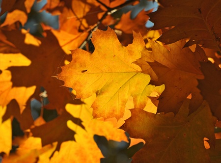 Colours of Autumn - colorful leaves photo