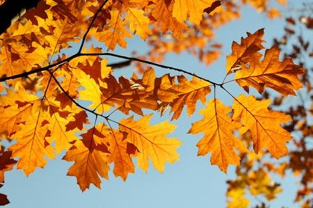 Kleuren van de herfst - kleurrijke bladeren