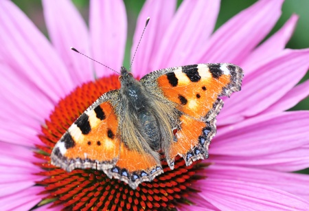 The color butterfly sitting on the flower photo
