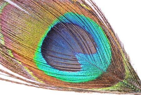 The abstract color background - peacock feather photo