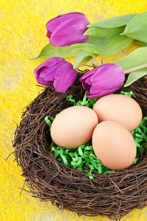 Three eggs in the nest and tulips . photo