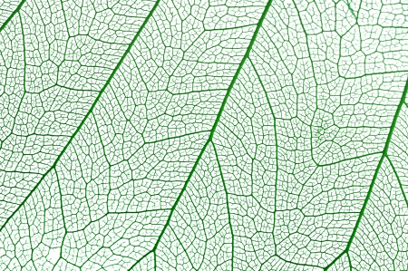 Dry leaf detail texture on white background photo