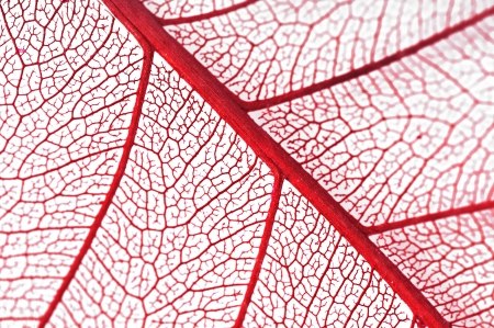 Dry leaf detail texture on white background Stock Photo