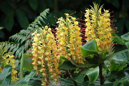 Flowers Roca-de-Velha from the Azores Stock Photo - 788548