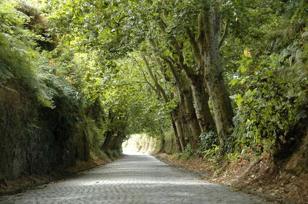 Road covered by lush green trees that make it look like a natural tunel Stock Photo - 816660
