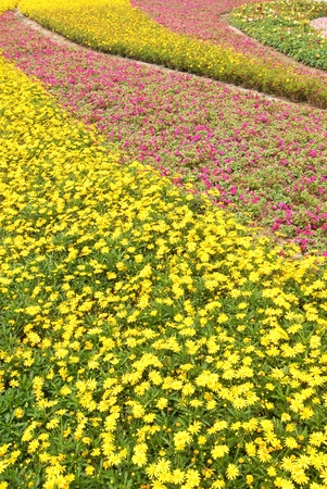 A flowerbed with sea of purple yellow and red flowers.    photo