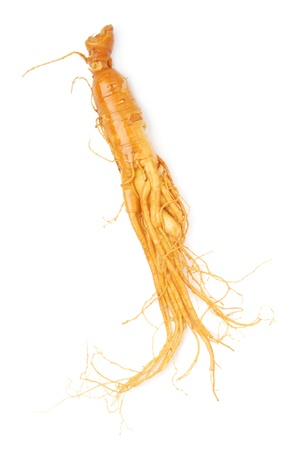 ginseng: Chinese  Ginseng On White Background