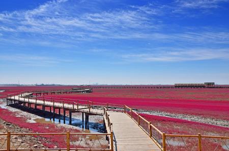 盤錦赤ビーチ、遼寧省、中国 写真素材